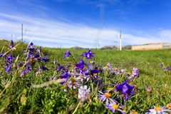 Луг плато вполне цветков стоковые фотографии rf