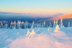 Луг покрытый с снегом Стоковое фото RF