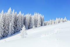 Луг покрытый с снегом Стоковые Фото