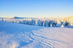 Луг покрытый с снегом Стоковые Изображения