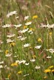 Луг полевого цветка в лете Букет поля стоковое фото