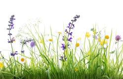 Луг полевого цветка и зеленая трава, белая предпосылка стоковое изображение