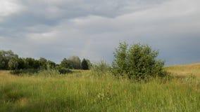 Луг после дождя Стоковое Фото