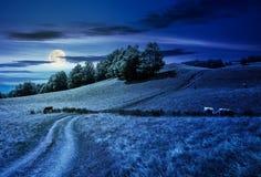Луг пути гористый сквозной травянистый Стоковые Фотографии RF