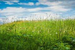 Луг середины лета Стоковое фото RF