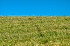 Луг снял на утре в зеленой и голубом Стоковые Изображения RF
