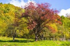 Луг с деревьями с цветами осени, Италия Стоковые Фото