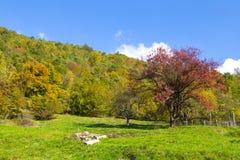 Луг с деревьями с цветами осени, Италия Стоковое Изображение