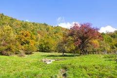Луг с деревьями с цветами осени, Италия Стоковые Фотографии RF