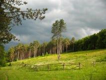 Луг с лесом хвои Стоковые Изображения