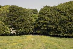 Луг с загородкой и лесами стоковое фото rf