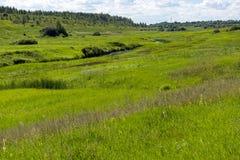 Луг с зеленой травой, поймой реки Стоковые Изображения RF