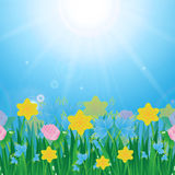 Луг с красочными цветками и зеленой травой бесплатная иллюстрация