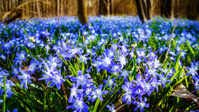 Луг с предыдущими цветенями Стоковое Изображение