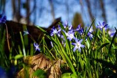 Луг с предыдущими цветенями Стоковое Фото