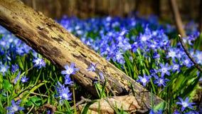 Луг с предыдущими цветенями Стоковая Фотография RF