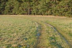 Луг с следами к лесу стоковые изображения rf