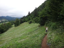 Луг с травой и цветками в горах Стоковые Фотографии RF