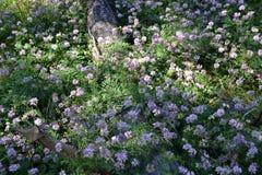 Луг с цветками в лесе Стоковое Фото