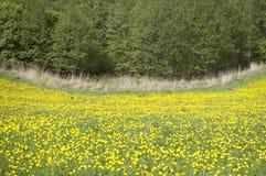 Луг с цветками Стоковое Фото