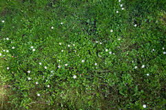 Луг с цветками Стоковые Фото