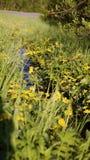 Луг с brooklet, летнее время Стоковые Фотографии RF