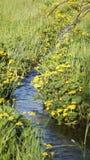 Луг с brooklet, летнее время Стоковые Изображения