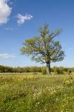 Луг цветения на весне Стоковое Изображение RF
