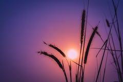 Луг цветет на росе утра под светом солнечного света мягким теплым стоковое фото rf