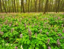 Луг цветка в красивом лесе стоковая фотография rf