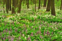 Луг цветка в красивом лесе стоковое фото rf