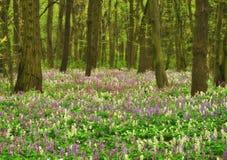 Луг цветка в красивом лесе стоковые фото