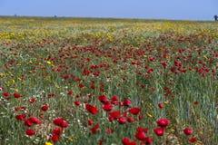 Луг цветка Стоковые Изображения RF
