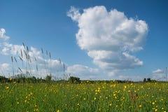 Луг цветка Стоковое фото RF