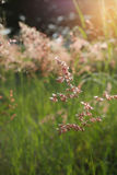 Луг цветка стоковая фотография