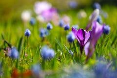 Луг цветка стоковые фотографии rf