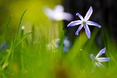 Луг цветка стоковое изображение rf