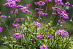 Луг цветка Стоковое Изображение