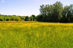 Луг цветка Стоковая Фотография RF