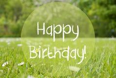 Луг Gras, цветки маргаритки, текст с днем рождения Стоковые Фотографии RF