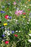 Луг Wildflower стоковая фотография rf
