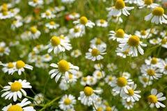 Луг Wildflower стоковые изображения rf