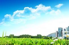 лужайка города Стоковое Фото
