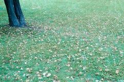 Лужайка осени в парке Стоковые Фото