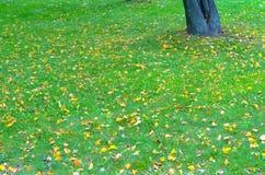 Лужайка осени в парке Стоковые Фотографии RF