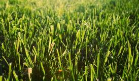 лужайка осени Стоковое Изображение