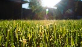 лужайка осени Стоковое Фото