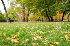 Лужайка осени Стоковые Изображения RF