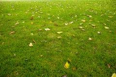 Лужайка осени Стоковые Фото