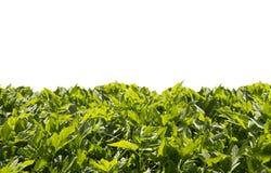 Лужайка от зеленых листьев Стоковые Изображения RF